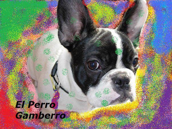 El Perro Gamberro